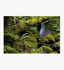 a quiet and peaceful place... Photographic Print