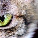 Cat's eye by meowiyer