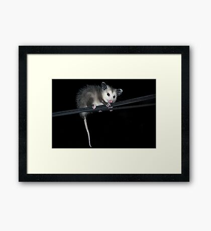 Baby Opossum Doing High Wire Act Framed Print