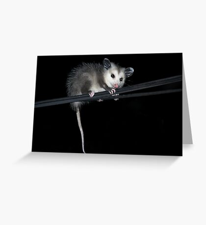 Baby Opossum Doing High Wire Act Greeting Card