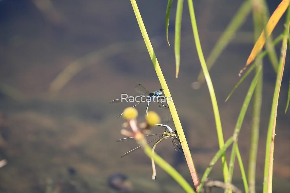 Mayflies by Raccatrap