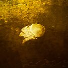 Jelly Fish by © Helen Chierego