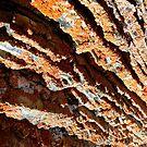 Lichen by Cyril Marchand