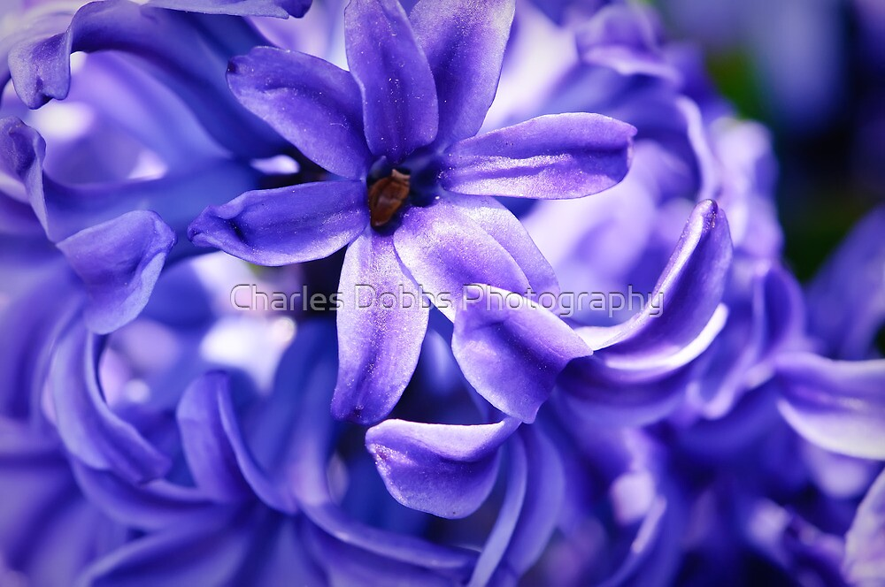 Blue Desire by Charles Dobbs Photography