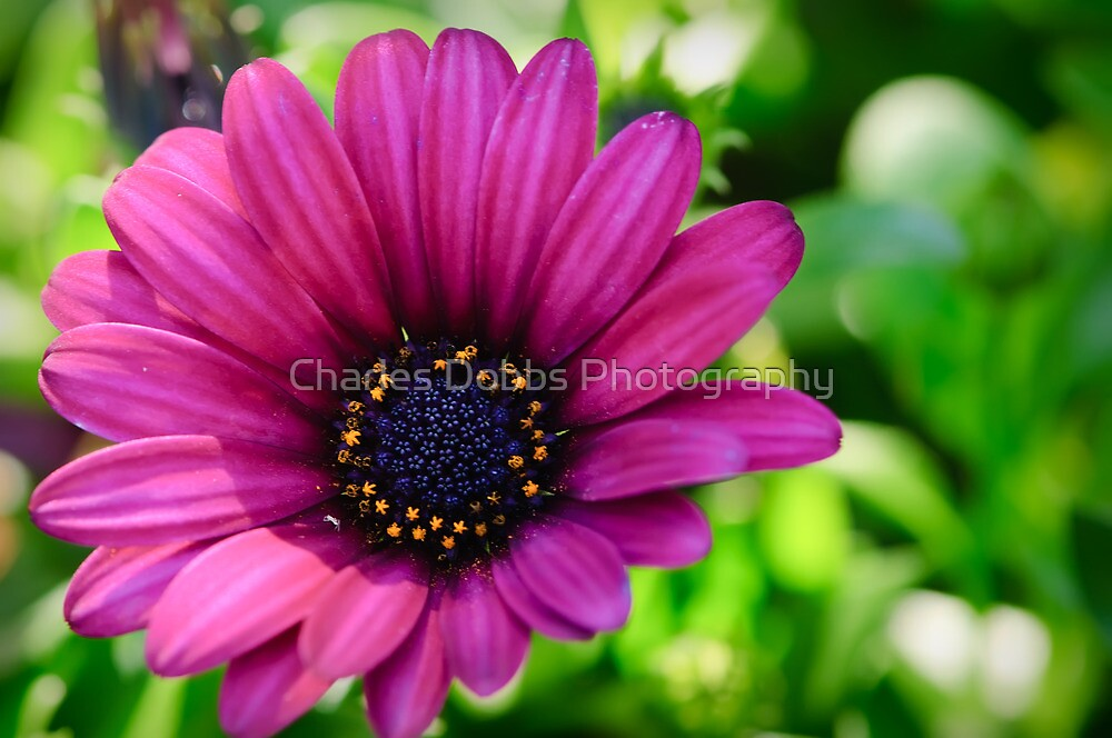Color Madness by Charles Dobbs Photography