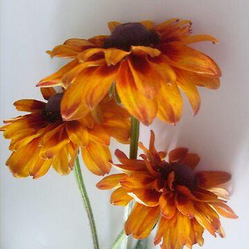 Rudbeckia flowers by beleja