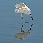 Great Egret Pounce by DonMc