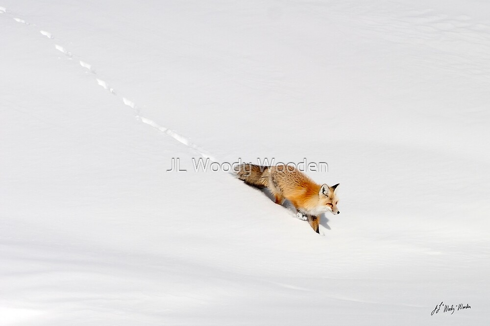 Fox In The Snow by JL Woody Wooden