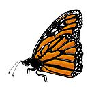 Beautiful Monarch Butterfly  by rmcbuckeye