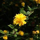 Yellow Flower by shane22
