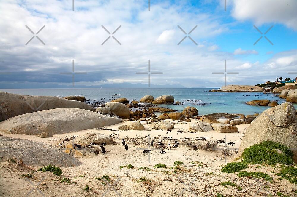 Boulders beach penguin colony by Rudi Venter