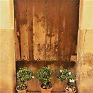 Rustic Majorca With Plants by Fara