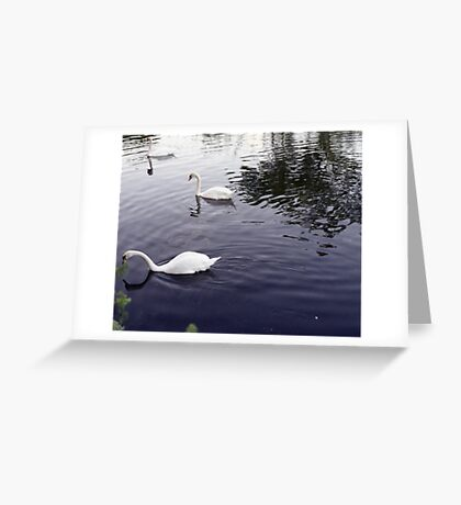 Swan at Nature Reserve Walthemstowe, Outdoor Photography Greeting Card