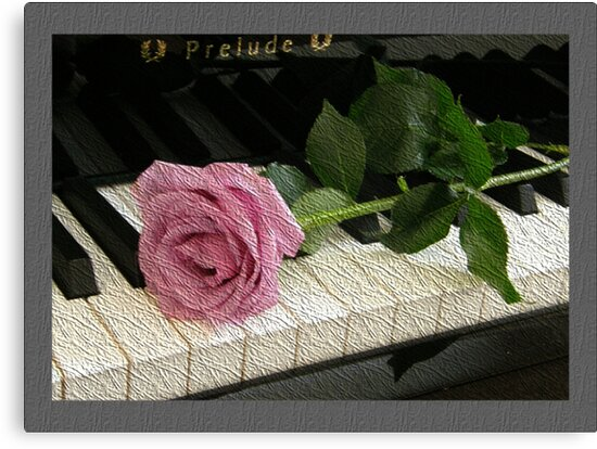 Pink Rose Prelude by Judith Hayes