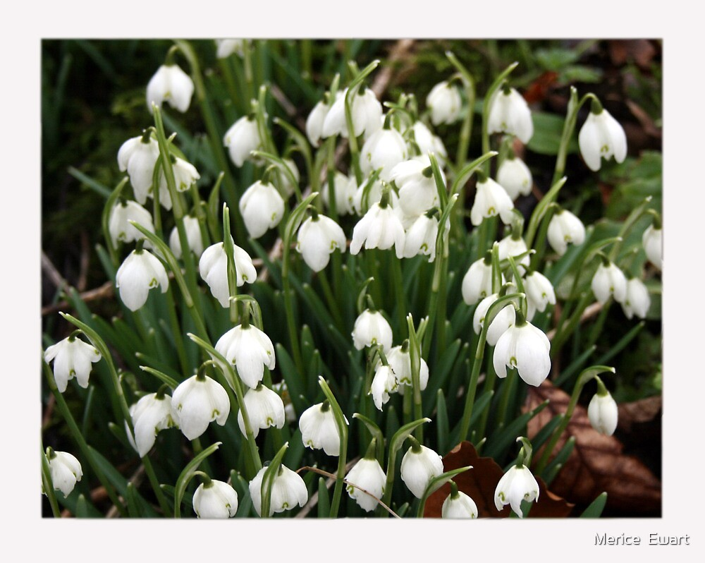 """Snowdrops and spring"" by Merice  Ewart"