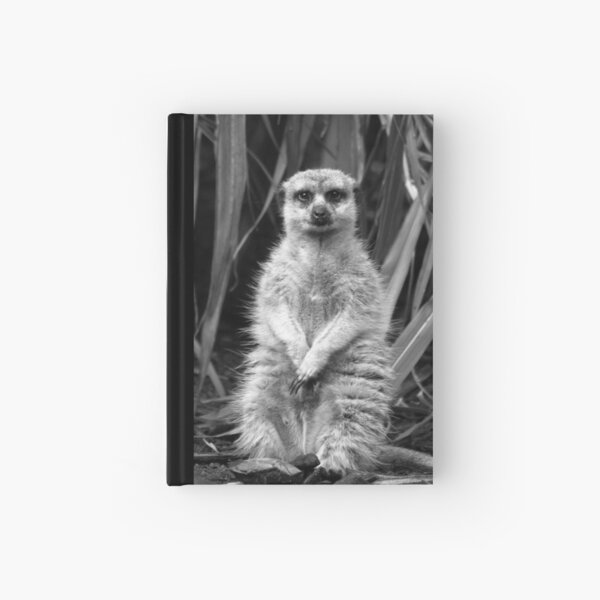 Meerkat Posing  Hardcover Journal