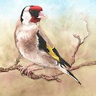 Goldfinch, Feb 2019 by MotiBlack