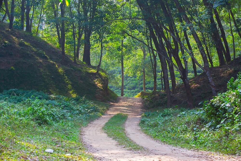 A road of Green path by shamim