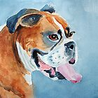 Beautiful boxer by Sharon Williamson