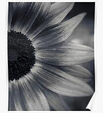 Glen Echo Flower Poster