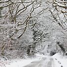 The Road to Winter Wonderland by Irina Chuckowree