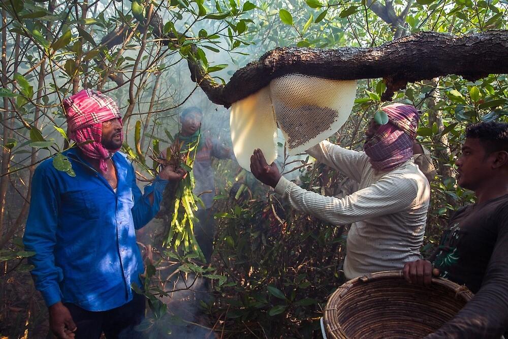 Honey Hunting Trip at Mangrove Forest Sundarban. by shamim