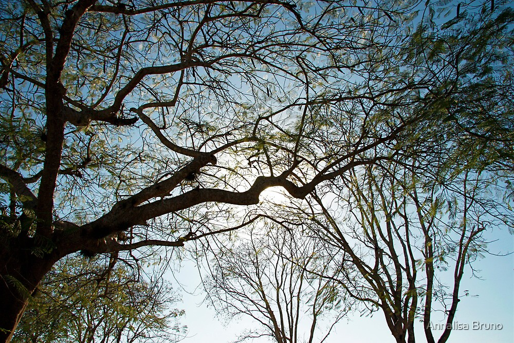 acacia tree by Annalisa Bruno