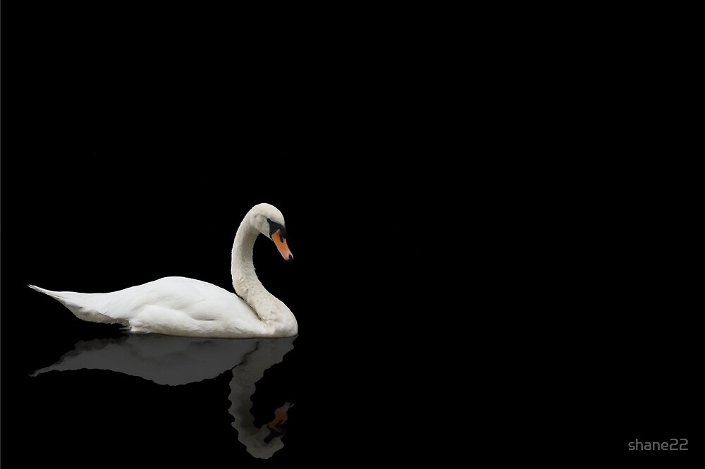 Quot Swan On Black Background Quot By Shane22 Redbubble