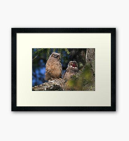 Owlet Siesta Framed Print