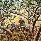 Eagles Nest by TheresaC1953