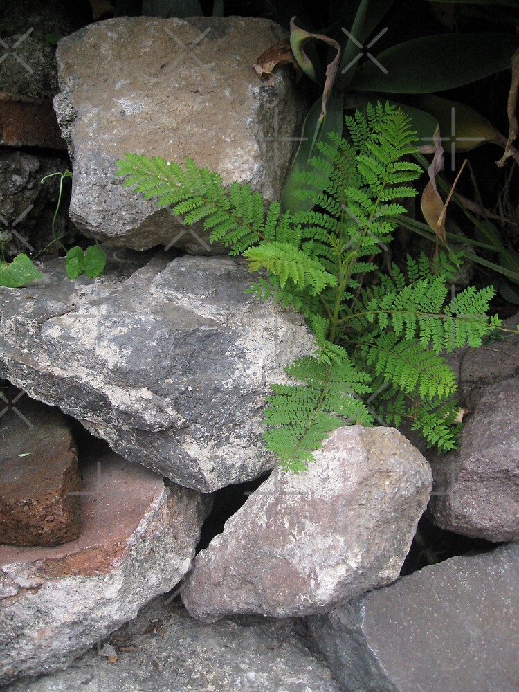 It's a Fern's Life! by Heather Friedman