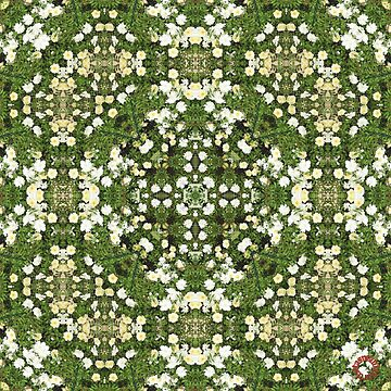 D1G1TAL-M00DZ ~ FLORAL ~ Rose Carpet 1 by tasmanianartist 170219 by tasmanianartist