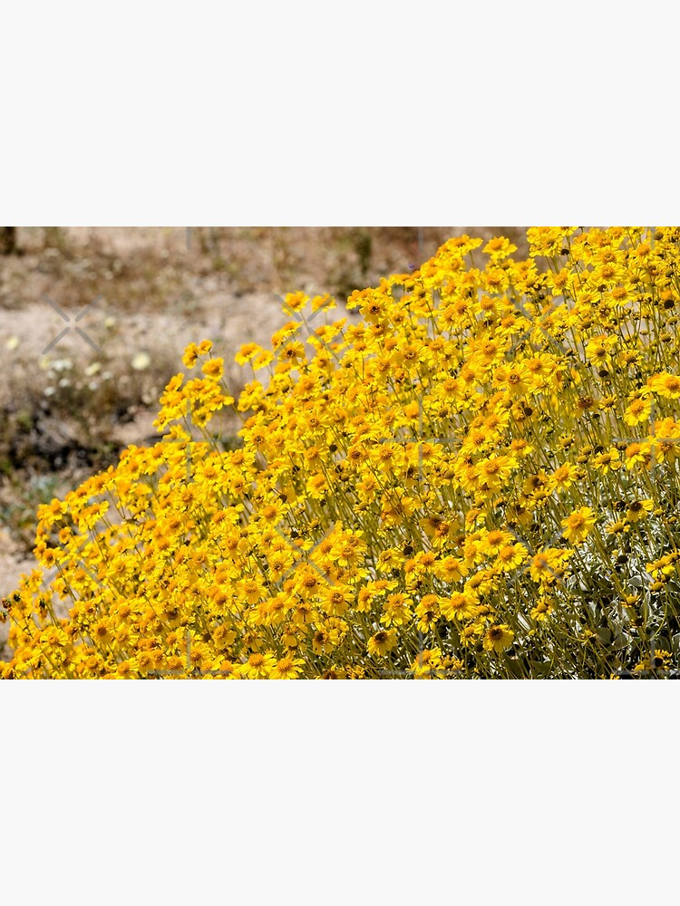 Super Bloom Paradise Joshua Tree 7300 by neptuneimages