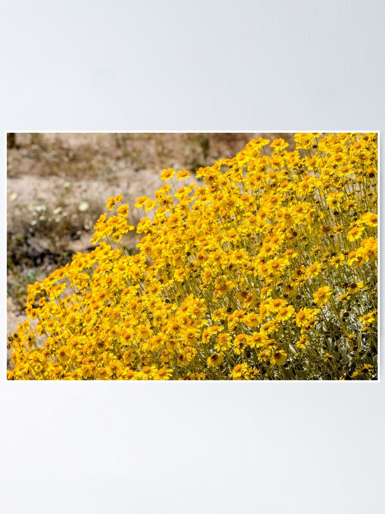 Alternate view of Super Bloom Paradise Joshua Tree 7300 Poster