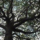 Tree of life by Matthew Walmsley-Sims