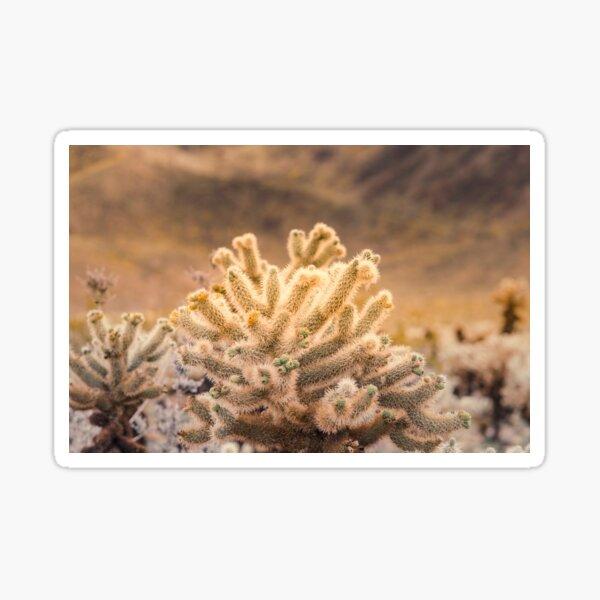 Super Bloom Paradise Joshua Tree 7373 Sticker