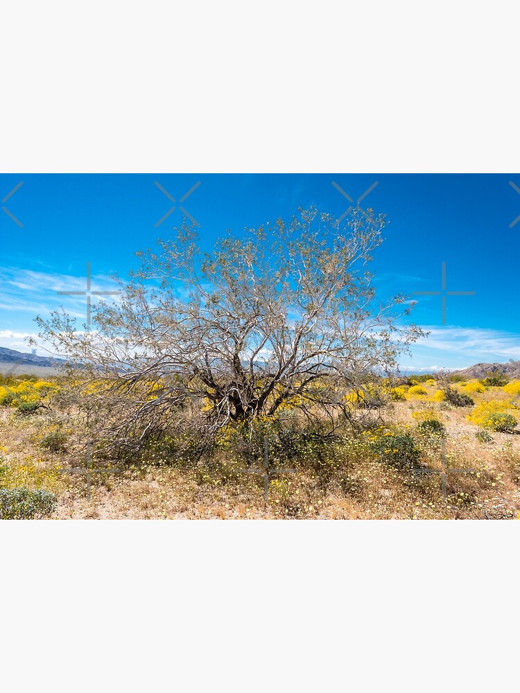 Super Bloom Paradise Joshua Tree 7289 by neptuneimages