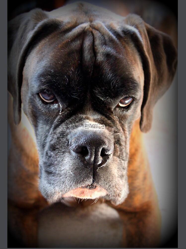 Gehen Sie voran .... Machen Sie meinen Tag ~ Boxer Dogs Series ~ von Evita