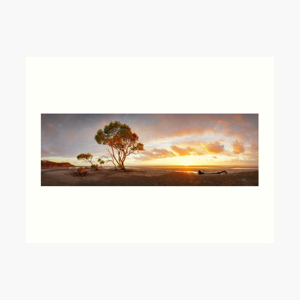 Mangrove Trees, Moreton Bay, Queensland, Australia Art Print