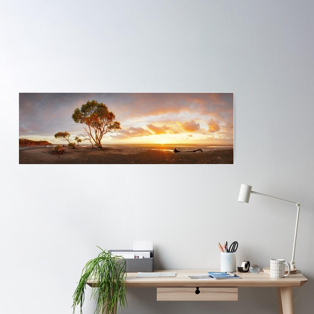 Mangrove Trees, Moreton Bay, Queensland, Australia Poster