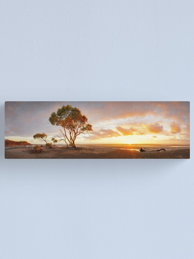 Alternate view of Mangrove Trees, Moreton Bay, Queensland, Australia Canvas Print