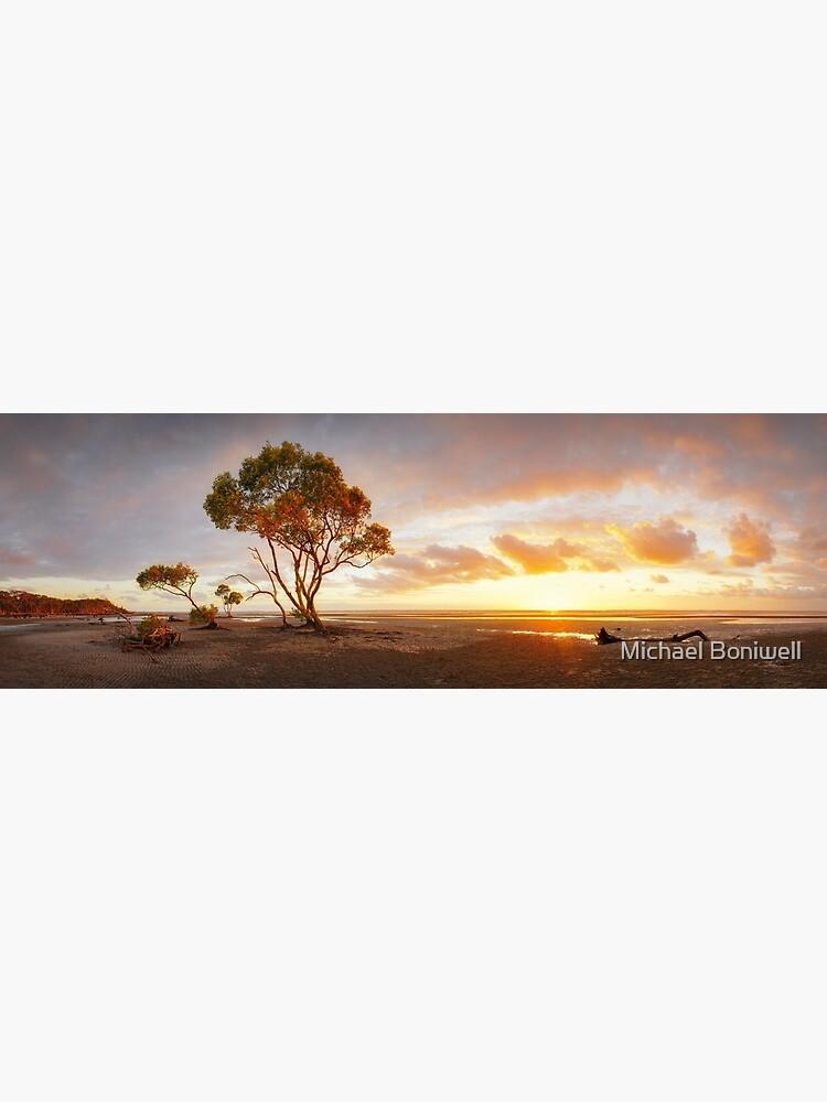 Mangrove Trees, Moreton Bay, Queensland, Australia by Chockstone