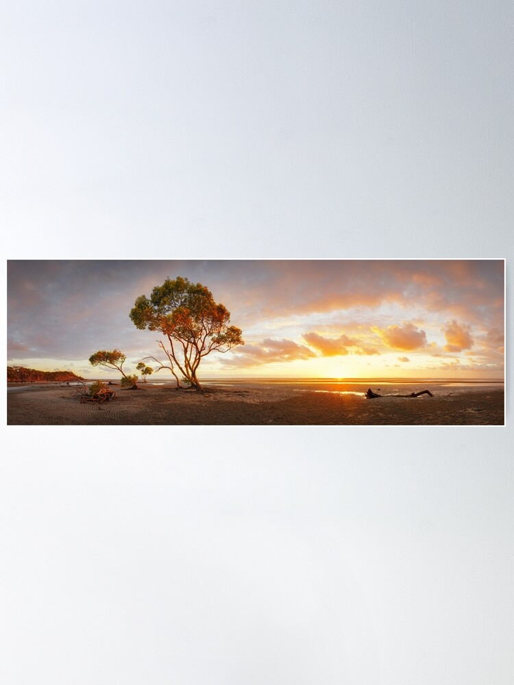 Alternate view of Mangrove Trees, Moreton Bay, Queensland, Australia Poster