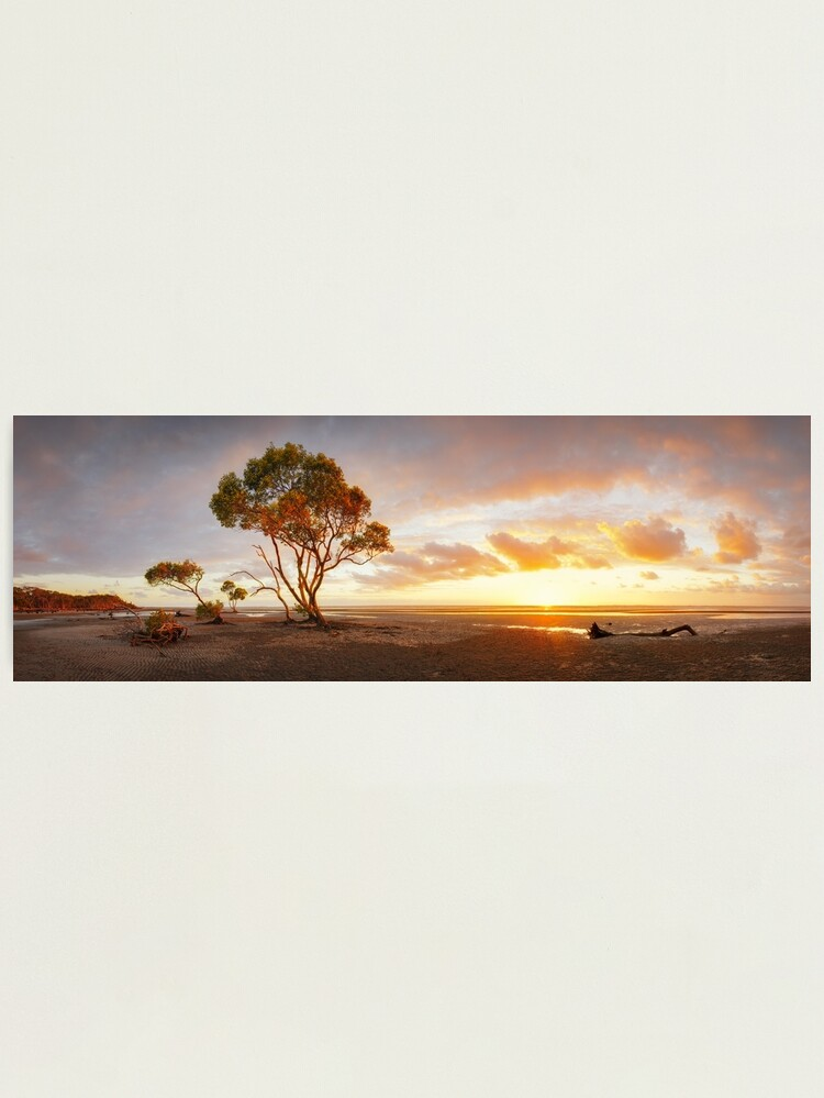 Alternate view of Mangrove Trees, Moreton Bay, Queensland, Australia Photographic Print