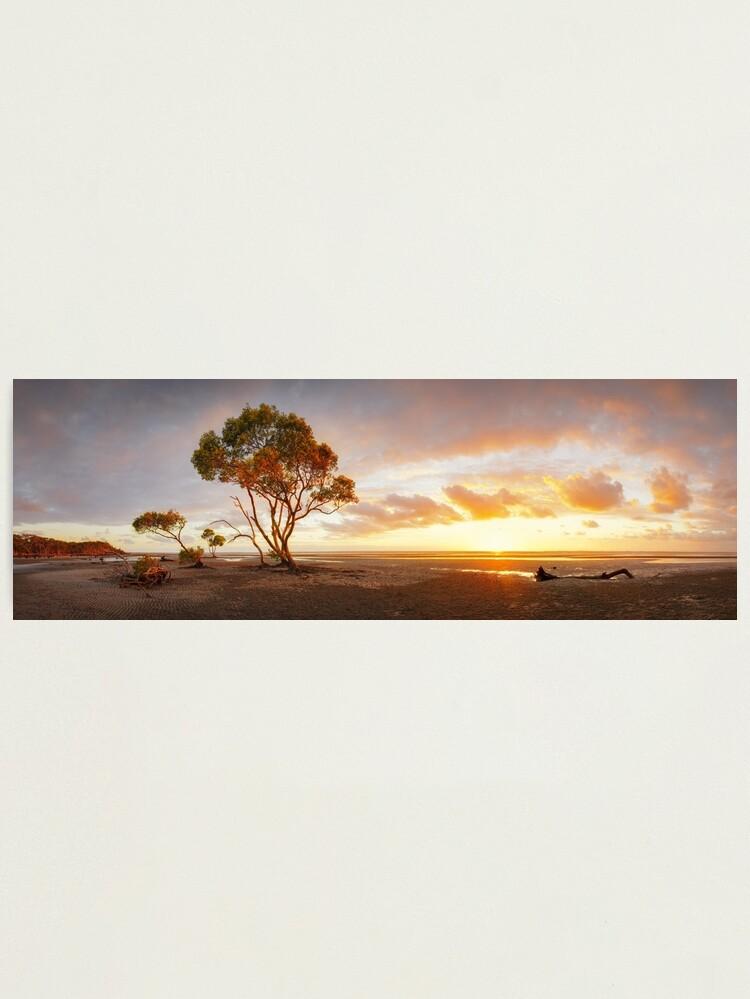 Alternate view of Mangrove Trees, Moreton Bay, Queensland, Australia Photographic Print