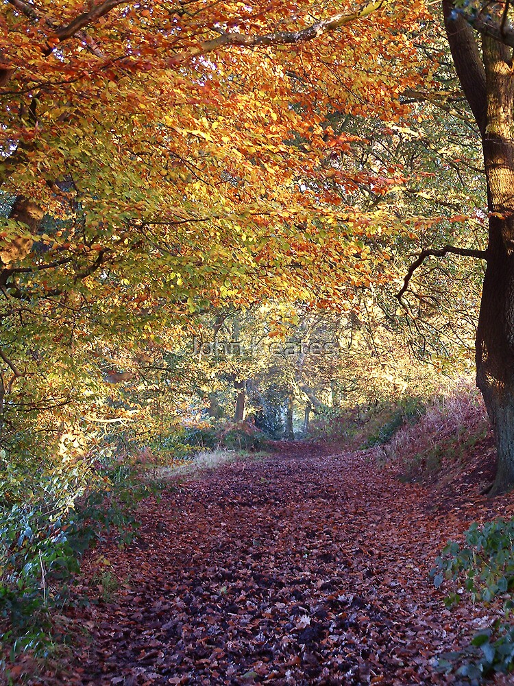 Autumn Avenue by John Keates