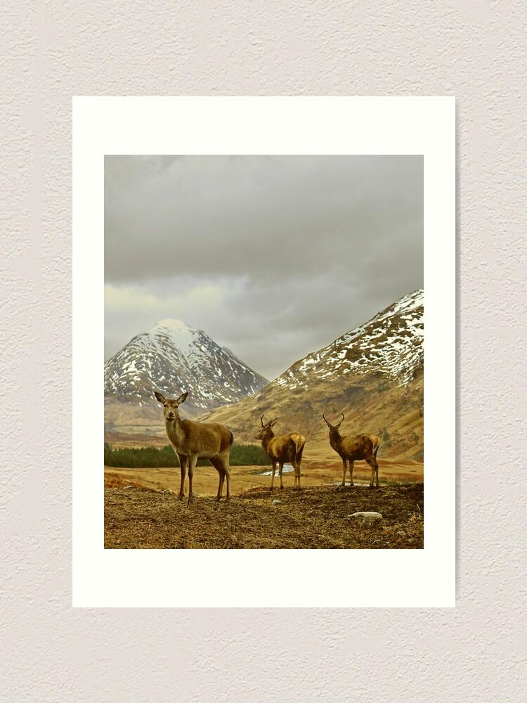 Alternate view of Deer Art Print
