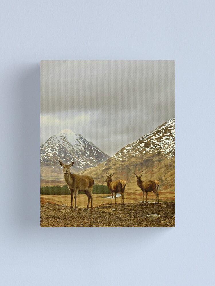 Alternate view of Deer Canvas Print
