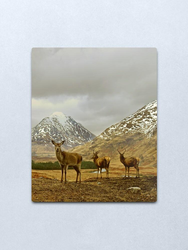 Alternate view of Deer Metal Print