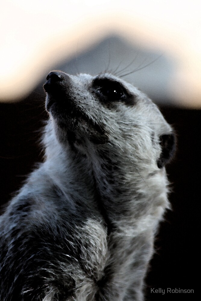 Meerkat portrait by Kelly Robinson